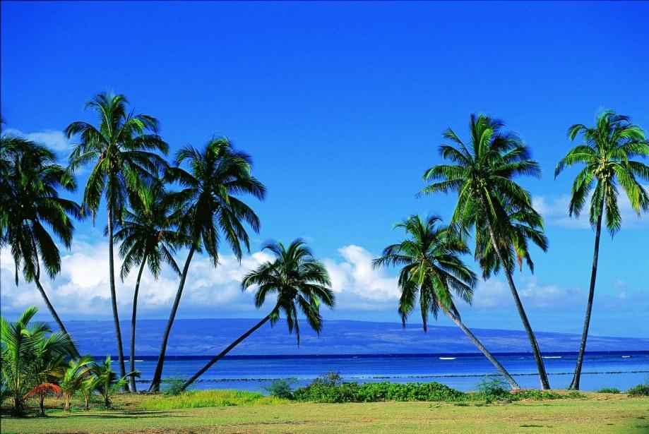 USA, Hawaii, Molokai, Molokai Shores, Palm trees, beach